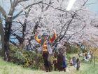 いわぎ三千本桜フォトコンテスト作品展示